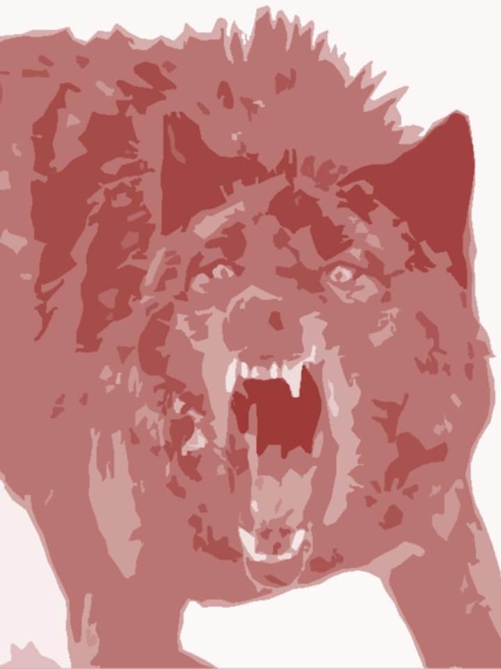 Wolf - Field & Stream